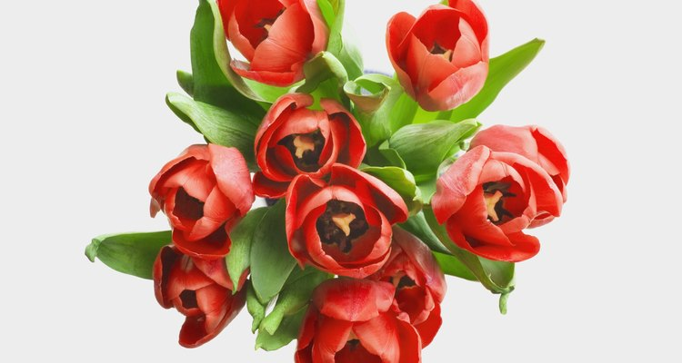 Red tulips are a symbol of unconditional love.