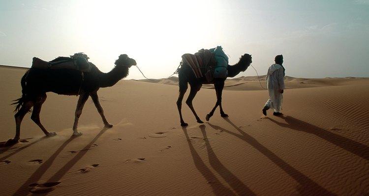 Nômade com camelos no deserto do Saara, Marrocos