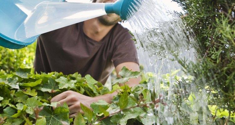 Mantén el suelo húmedo durante las primeras semanas, hasta que las plantas estén bien establecidas.