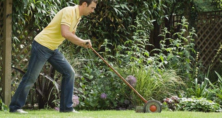 El mantenimiento regular del césped zoysia ayuda a que se vea verde y saludable.