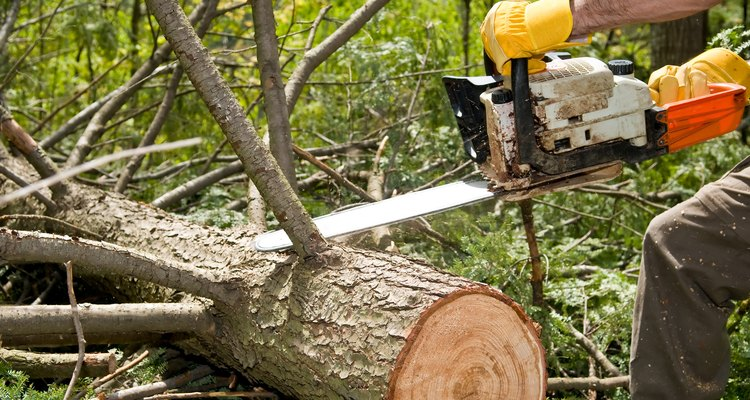 Las ramas recortadas más grandes pueden ser más caras de eliminar.