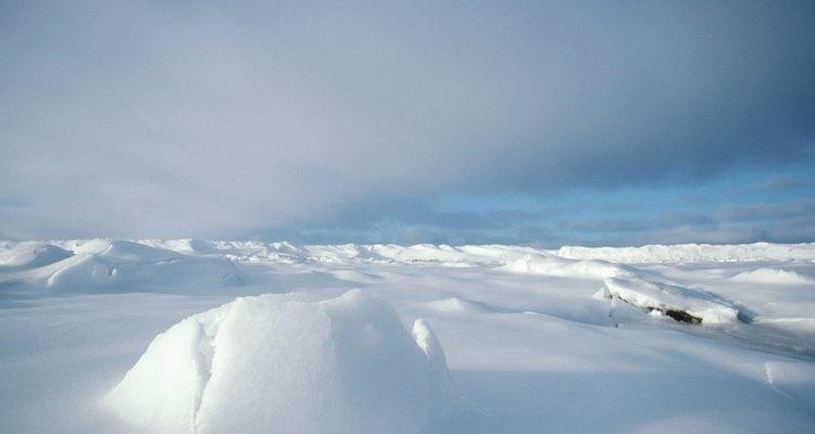 Las plantas se enfrentan a un entorno desafiante y duro en la tundra ártica.