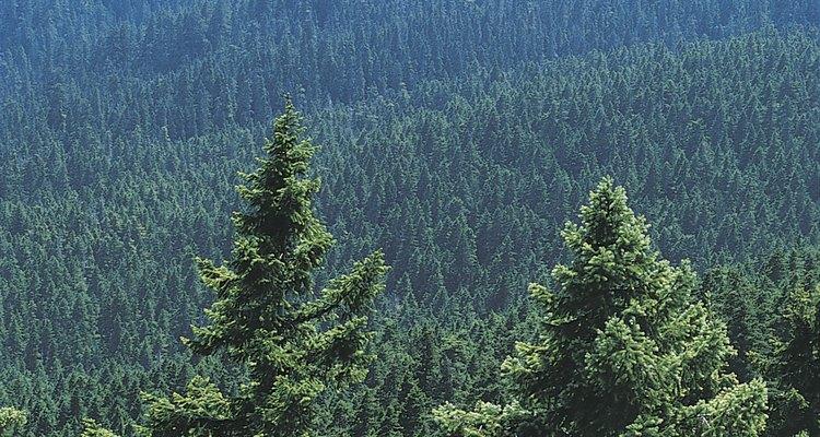 Bosque siempre verde.
