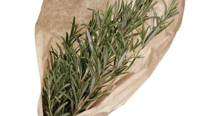 El romero puede crecer en forma de seto o como planta de arrastre en el suelo, dependiendo de la variedad.