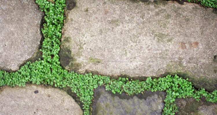 Flagstone paths can be created on flat or sloped areas.
