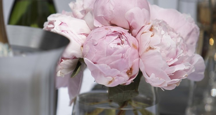 Peonies are a favourite cut flower for vases and arrangements.
