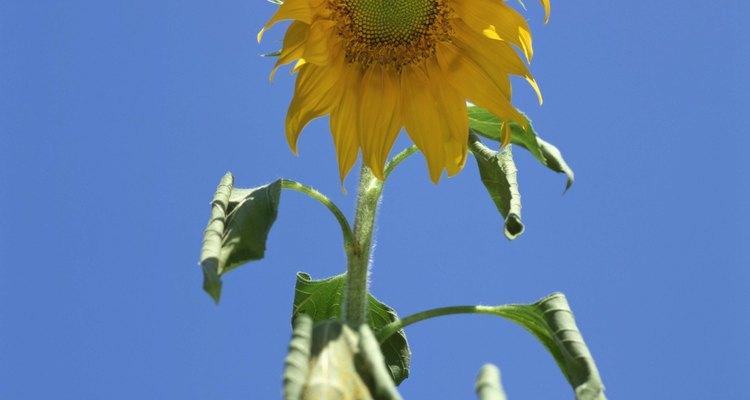 Determinar por qué tus flores se están marchitando es la clave para revivirlas.