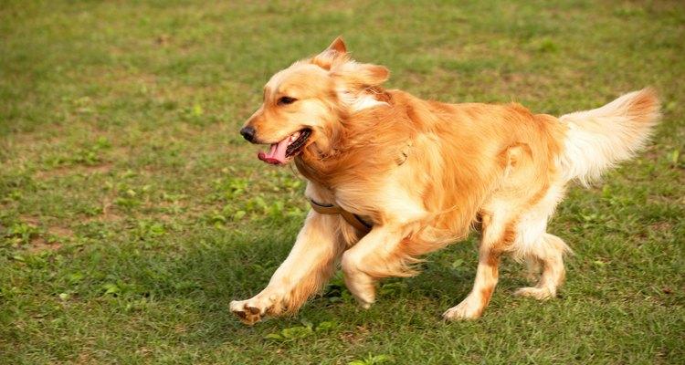 Presta atención para ver si tu perro tiene problemas para respirar.