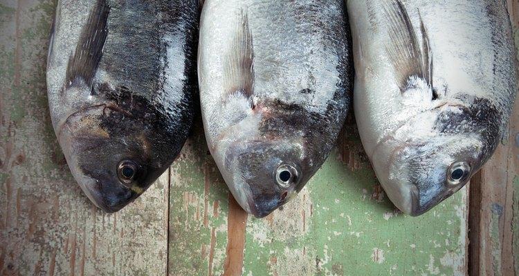 Three Fresh Fish