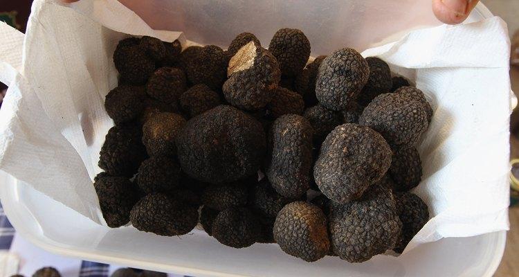 Las trufas son una clase de hongos muy codiciados por su aroma y sabor.