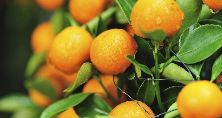 Evite frutas cítricas