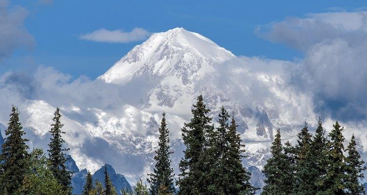 Las píceas con el Monte McKinley como telón de fondo.
