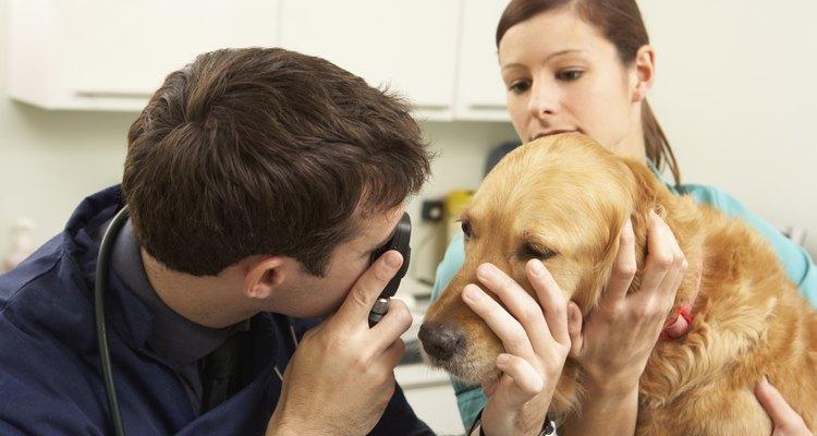 Si una infección en el oído empeora, puede requerir cirugía.