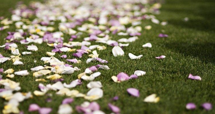 Colorful wedding rose petals