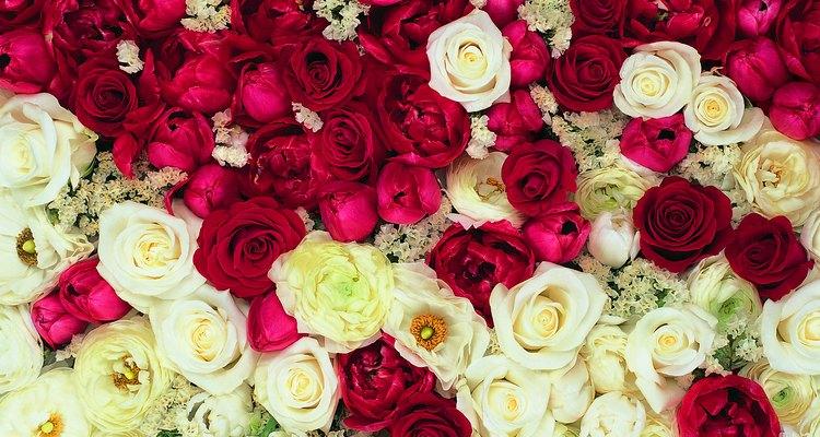 Otra consideración a tener en cuenta es que cuando combinas rosas de diferentes colores, el significado cambia.