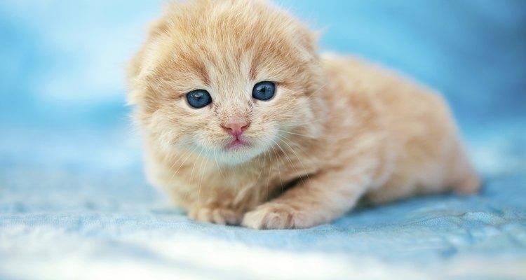 Hay muchas maneras de destetar a tus gatitos.
