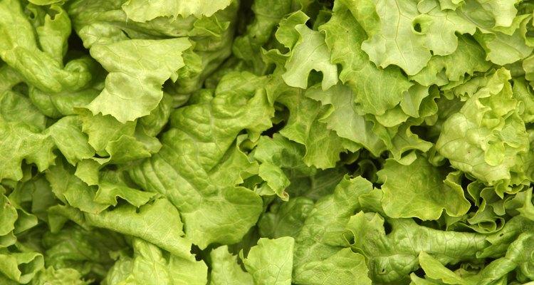 Algumas verduras toleram pontos mais sombreados no jardim