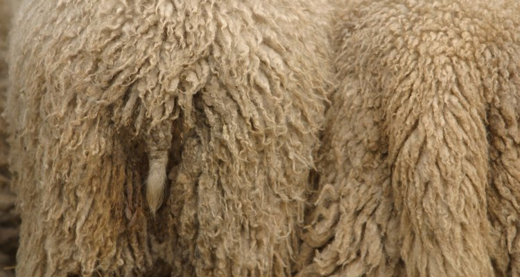 A pele de carneiro necessita de cuidado e manutenção constantes
