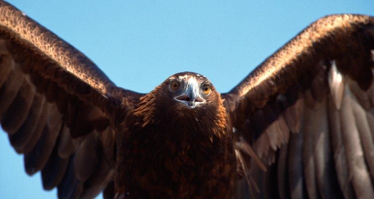 Las plumas de águila eran muy preciadas por los nativos Cherokee.