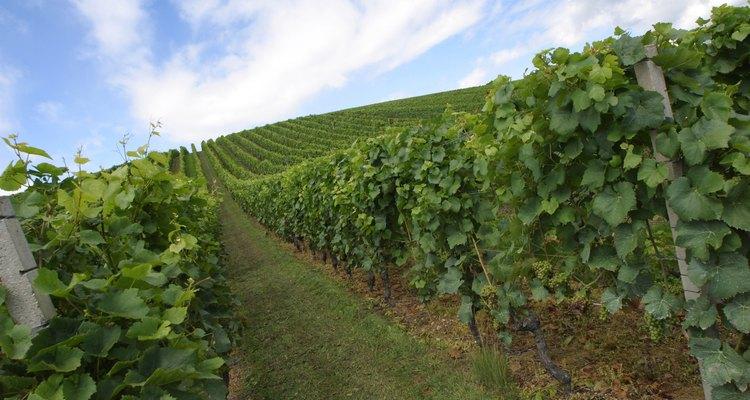 Borgoña produce algunos de los mejores vinos franceses.