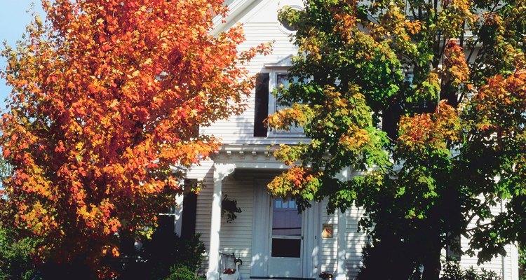 Los árboles plantados cerca de tu casa pueden causarle un daño importante a los cimientos.