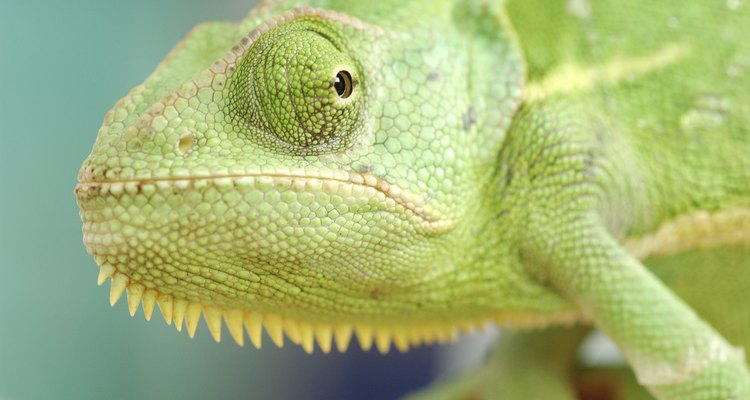 Children can pretend to be lizards with a homemade mask.