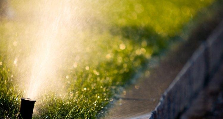 Ajusta la frecuencia de riego en función de la temporada.