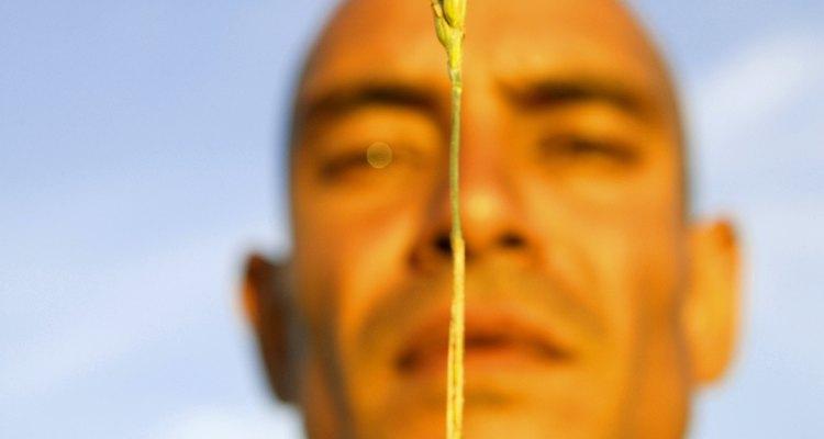 El aceite derivado de germen de trigo tiene fines medicinales.