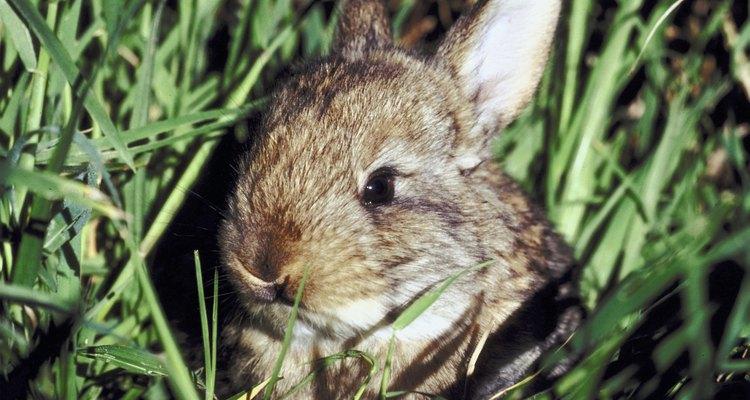 Flores que coelhos não gostam de comer