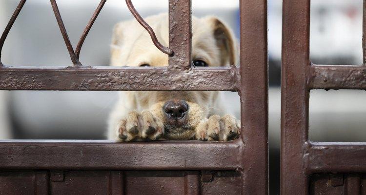 Deixe seu cão em um ambiente seguro e silencioso