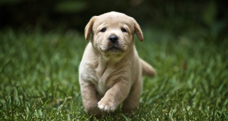 Los cachorros son más susceptibles a la salmonella.
