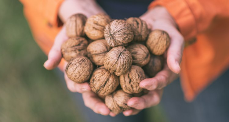 Active Senior woman with handful of walnuts