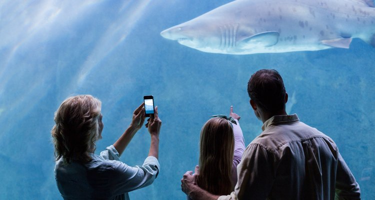 Family looking at the shark tank at aquarium