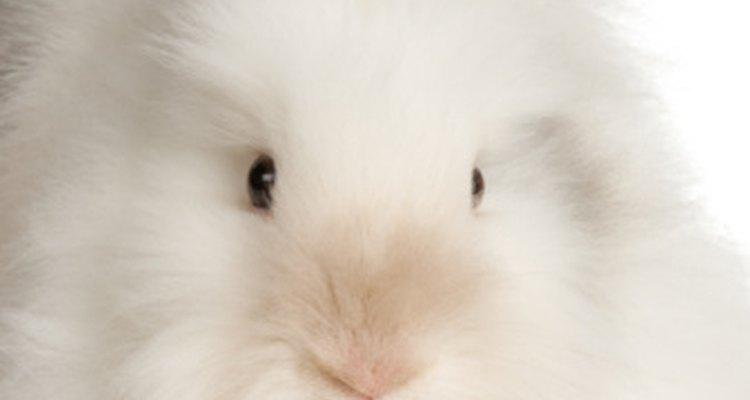 La piel del conejo Angora puede hilarse con lana de cordero para confeccionar suéteres.