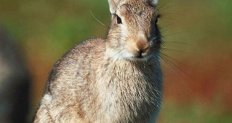 Las pieles de conejo son suaves y vienen en una variedad de colores.