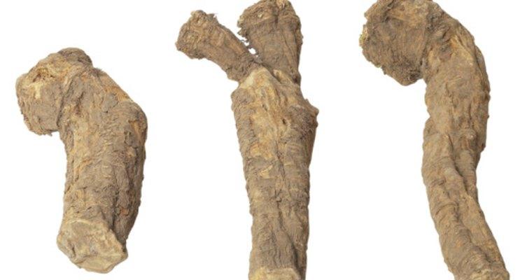 Los tubérculos de mandioca son una rica fuente de hidratos de carbono.
