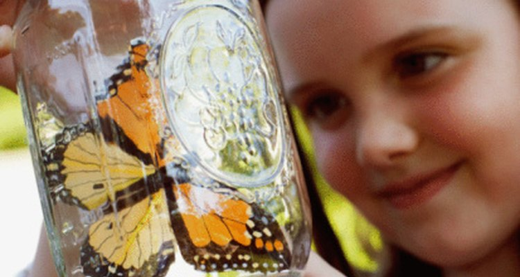 A los niños en edad preescolar les encantan las mariposas.