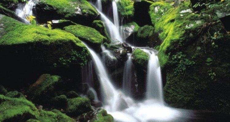 Las selvas tropicales contienen varios ecosistemas.