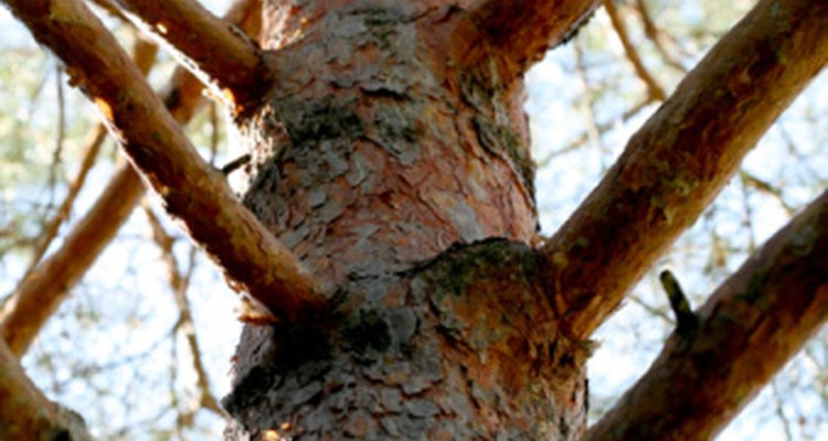 The second-level options symbolise branches because they stem from the same trunk.