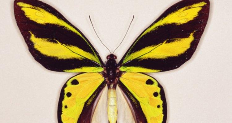 Crea actividades divertidas que involucren mariposas.