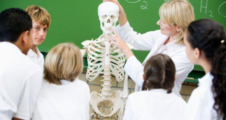 El esqueleto le ayuda a los alumnos visuales a seguir la lección.