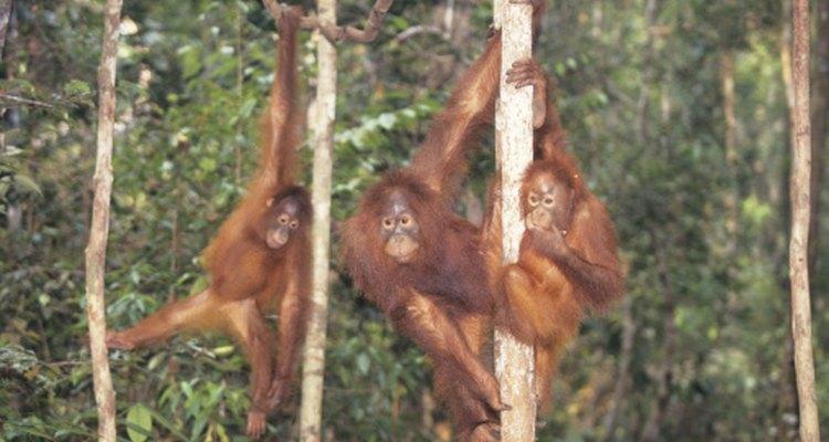 Los preescolares pueden dejar salir a su animal interior mientras trabajan en una tarea sobre la temática del zoológico.