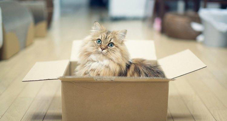 Incluso una caja puede ser un lugar lo suficientemente bueno para que tu gato descanse con placer.