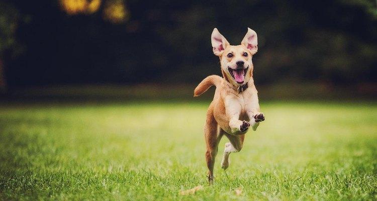 Jugar con los animales es una manera de contactarte con ellos y de que gasten su energía excesiva.