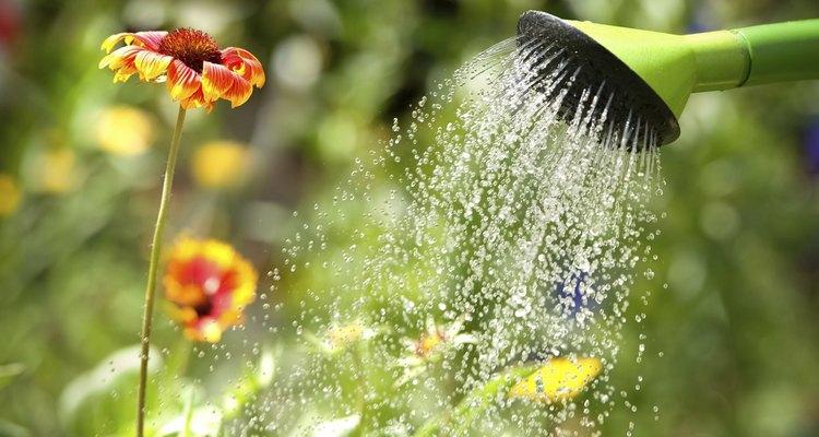 El riego es un factor determinante en tus plantaciones hogareñas.