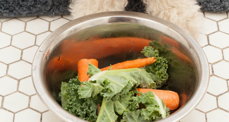 A adição de legumes, como cenoura, couve e brócolis à dieta do seu cão pode ajudar no tratamento