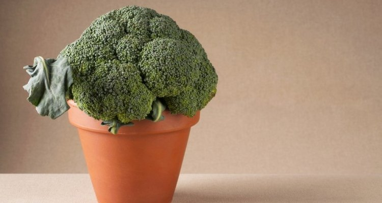 Cultiva brócoli en una maceta.