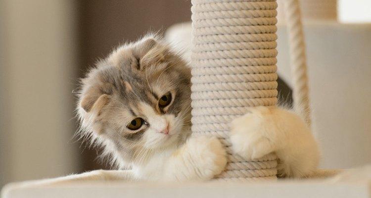 A los gatos les encanta mantener sus garras afiladas.