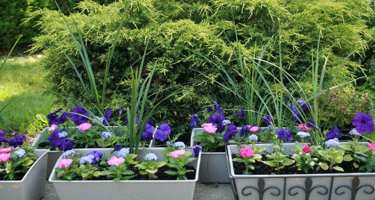 Si tienes un terreno con cultivos y plantas, puedes utilizar tus bolsitas de té para fertilizarlo.