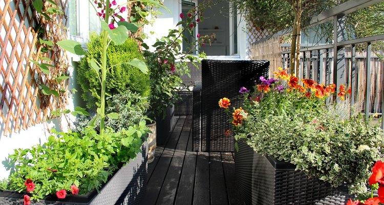 Es importante que tu balcón reciba una buena carga de luz solar todos los días.
